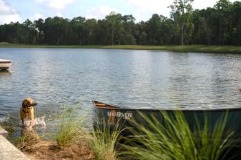 Dog_next_to_canoe_Carolina_Park_680.jpg
