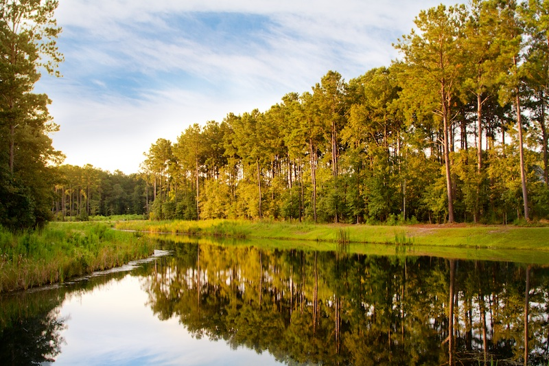 Mount Pleasant | Carolina Park's beautiful community lakes